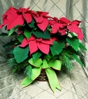 Poinsettia from Flowers by Ramon of Lawton, OK