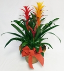 Bromeliad Trio from Flowers by Ramon of Lawton, OK