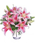 STUNNING STARGAZERS from Flowers by Ramon of Lawton, OK