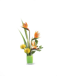 Tropical Bright Arrangement from Flowers by Ramon of Lawton, OK