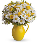 Teleflora's Sunny Day Pitcher of Daisies from Flowers by Ramon of Lawton, OK